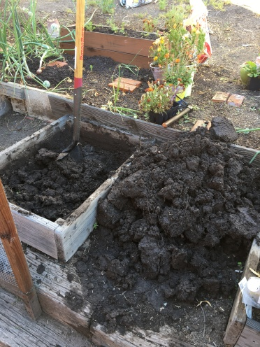 A dug up planting bed.